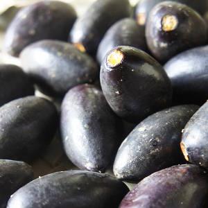 Reife Früchte der Pilinuss