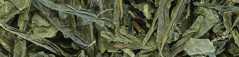 Bancha Tee